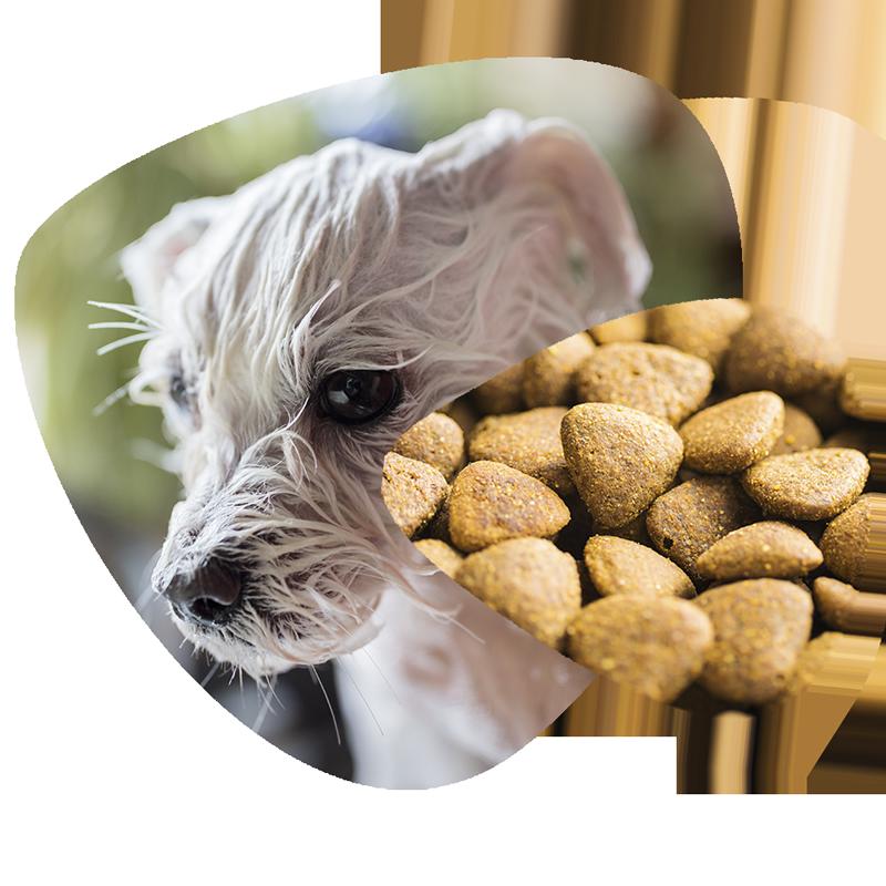 higiene-y-comida-para-mascotas1